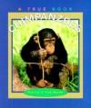Chimpanzees - Patricia A. Fink Martin