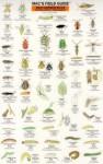 Mac's Field Guide: Bad Garden Bugs of the Pacific Northwest : Good Garden Bugs of the Pacific Northwest (Mac's Field Guides) - Craig MacGowan