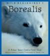 Borealis: A Polar Bear Cub's First Year - Rebecca L. Grambo