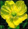The Color Garden: Yellow - Elvin McDonald