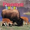 Prairie Babies - Northword Press, Aimee Jackson, Kristen McCurry, North Work, Lisa Husar, Mike Husar