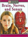 Brain, Nerves and Senses - Steve Parker, Kristina Routh