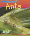 Ants - Sue Barraclough
