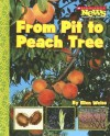 From Pit to Peach Tree - Ellen Weiss