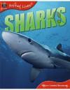 Sharks - Sally Morgan