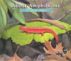 About Amphibians: A Guide for Children - Cathryn Sill