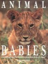 Animal Babies: A Habitat-By-Habitat Guide to How Wild Animals Grow - Steve Parker