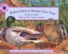 Mallard Duck at Meadow View Pond - Wendy Pfeffer