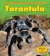Tarantula - Anita Ganeri