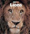 Lions - Sandra Lee
