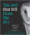 The Owl that Fell from the Sky - Stories of a Museum Curator - Brian Gill