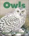 Owls (Kids Can Press Wildlife Series) - Adrienne Mason