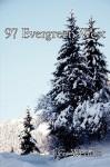 97 Evergreen West - Jeff Weddle
