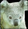 Animal-Shaped Board Books: Baby Animals - Deni Bown