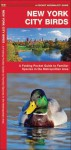 New York City Birds: A Folding Pocket Guide to Familiar Species in the Metropolitan Area - James Kavanagh