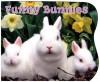 Funny Bunnies - Emily Sollinger, Emily Sollinger