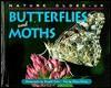 Butterflies and Moths - Elaine Pascoe
