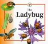 The Ladybug - Sabrina Crewe
