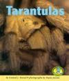 Tarantulas - Conrad J. Storad