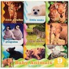 Baby Animals in the Wild - Chronicle Books