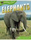 Elephants (Animal Lives) - Sally Morgan