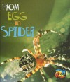From Egg to Spider - Anita Ganeri