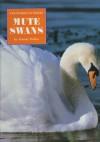 Mute Swans - Wendy Pfeffer