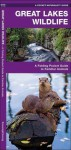 Great Lakes Wildlife: A Folding Pocket Guide to Familiar Species - James Kavanagh, Raymond Leung