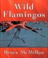 Wild Flamingos - Bruce McMillan