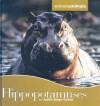Hippopotamuses - Judith Jango-Cohen