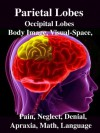 Parietal Lobes: Occipital Lobes, Body Image, Visual-Space, Pain, Neglect, Denial, Apraxia, Math, Language - R. Joseph