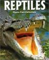Reptiles - Robert Matero