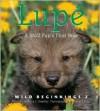 Lupe - Rebecca L. Grambo