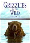 Grizzlies in the Wild - Kennan Ward