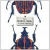 The Beetle Book - Steve Jenkins