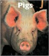 Pigs - Peter Murray