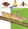 Insects - Jen Green