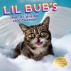 Lil Bub 2016 Wall Calendar - Lil Bub Lil Bub