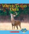 White-Tailed Deer - Katie Marsico
