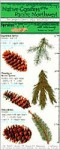 The Ecopress Complete Guide to Native Conifers of the Pacific Northwest - Chris Beatty, John Ledges