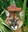 Les Felins - Bobbie Kalman, Amanda Bishop