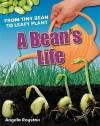 Bean's Life - Angela Royston