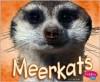 Meerkats - Jody Sullivan Rake