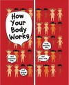 How Your Body Works [With 32 Page Easy to Follow Guide and Cut OutsWith Plastic Artery, Vein Tubes, Brain, Eyeball] - Anita Ganeri, Marijan Raml Jak