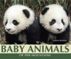Baby Animals of the Mountains - Carmen Bredeson