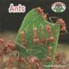 Ants - Trudi Trueit