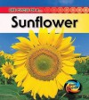 Life Cycle of A-- Sunflower - Angela Royston