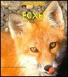 Foxes and Their Homes - Deborah Chase Gibson