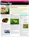 CHART: Guinea Pigs (Quamut) - NOT A BOOK