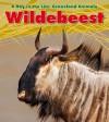 Wildebeest - Louise Spilsbury